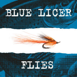 The Blue Licer Flies